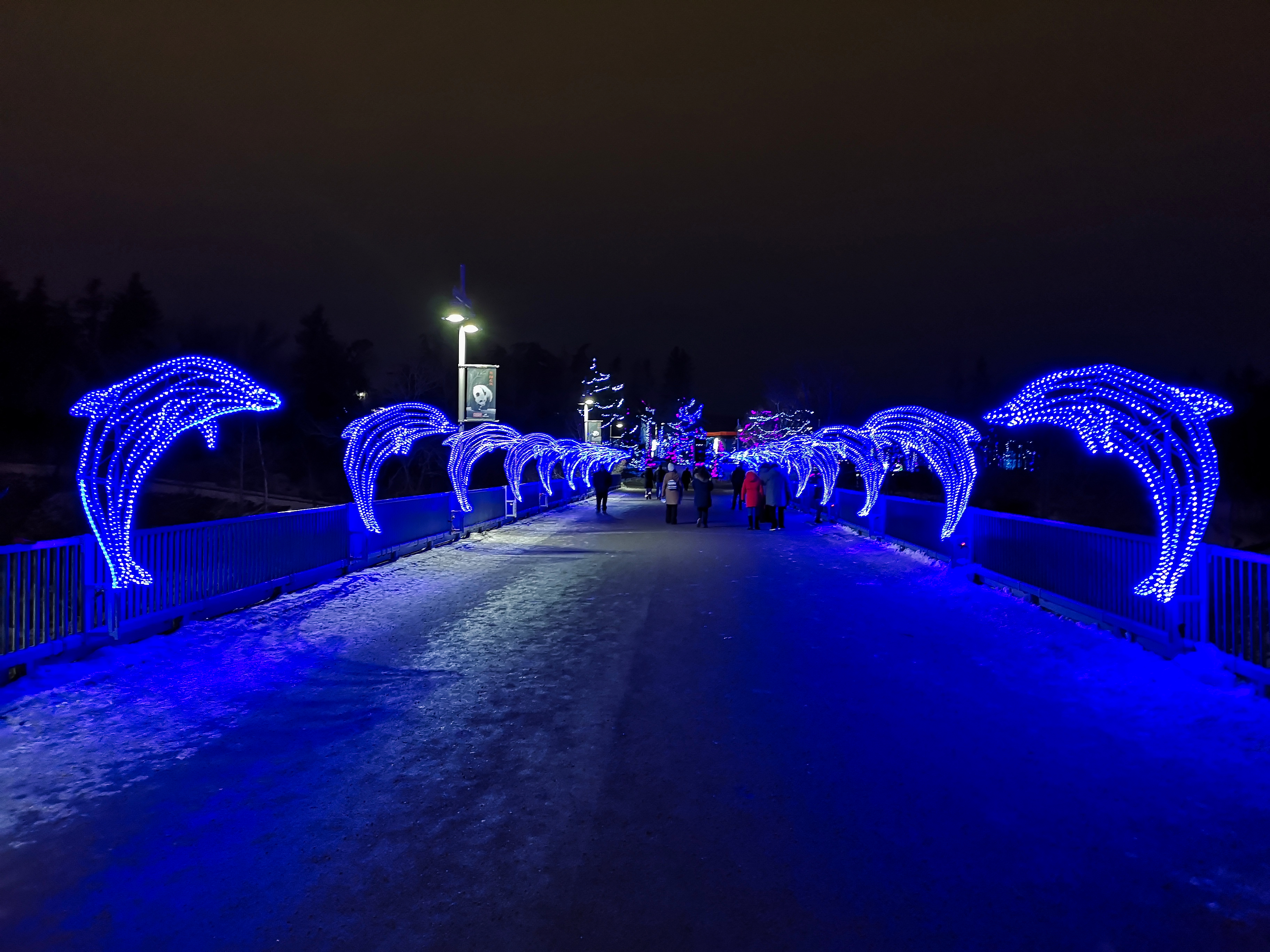 Dolphins at Zoolights in Calgary