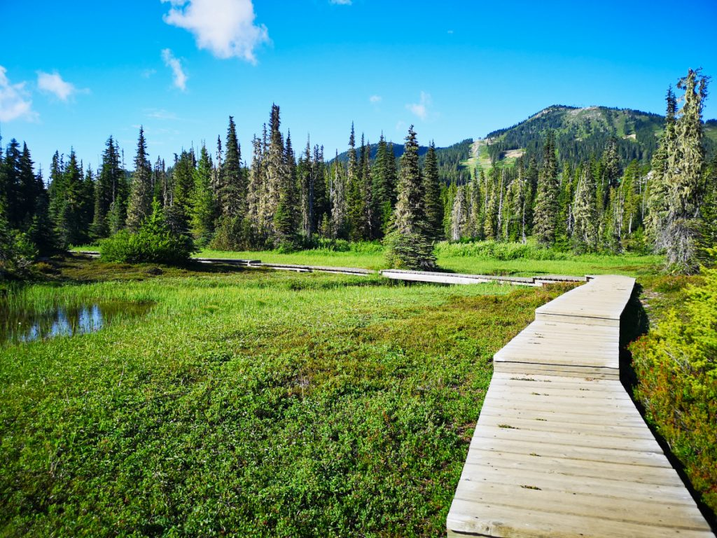 Paradise Meadows in Strathcona Park