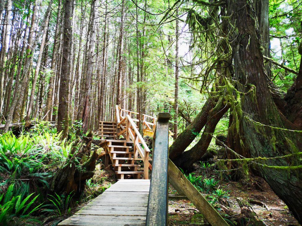 Rainforest trail in Tofino