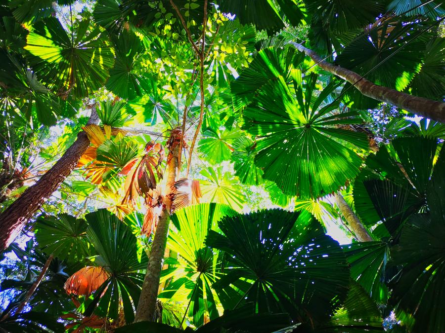 Daintree Rainforest, the end of my east coast Australia road trip