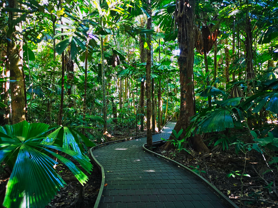 Dubuji Boardwalk, Daintree Rainforest